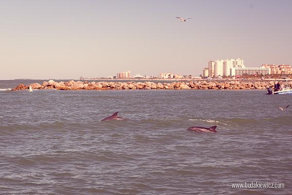 delfiny na florydzie