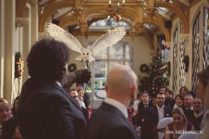 sowa przynosi obrączki na ślubie